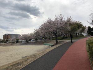 桜を見ながらジョギング!